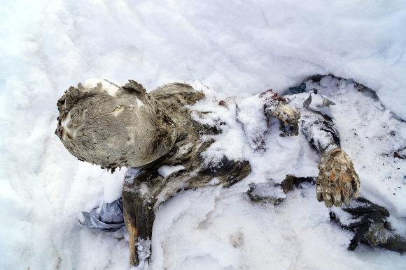 """""""Reuters""""/""""Scanpix"""" nuotr./Rastos mumijos Meksikoje"""