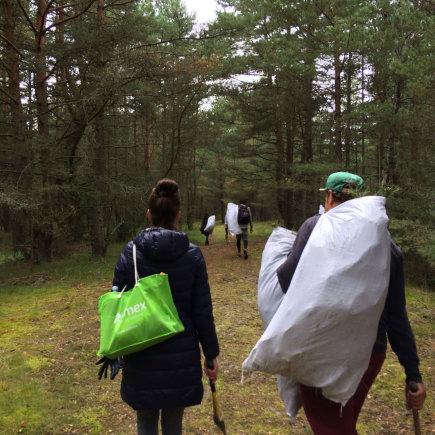 Organizatorių nuotr./Pušų sodinukai maišuose