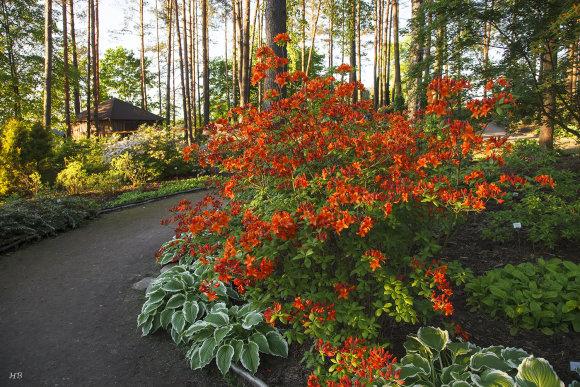 Henriko Balandžio nuotr./Kairėnų botanikos sodo augmenija