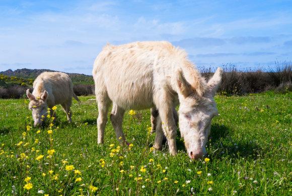 123RF.com nuotr./Sardinijos gyvūnai