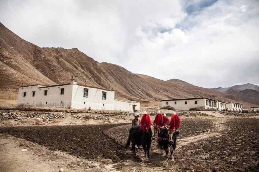 Tibeto kultūra po sparčiai nyksta