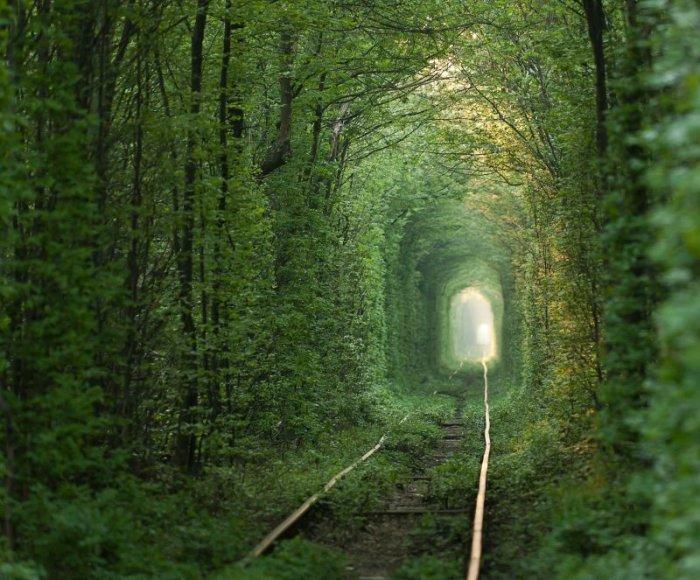 Meilės tunelis, natūraliai suformuotas iš medžių Ukrainoje, Klevane