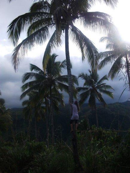 Bandymas kopti į palmę