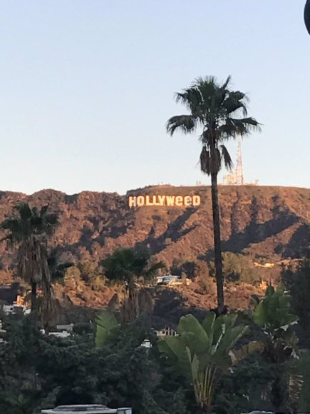 """Hollywood"" virto ""Hollyweed"""