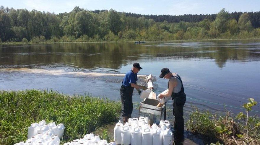 Į Nemuną ties Varviškės kaimu išpiltas biologinis preparatas mašalų lervoms naikinti