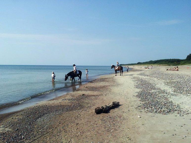 Žirgai Karklės pakrantėje