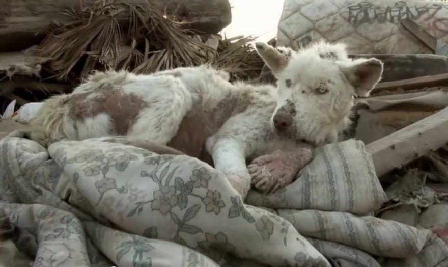 Šuo Miley sąvartyne