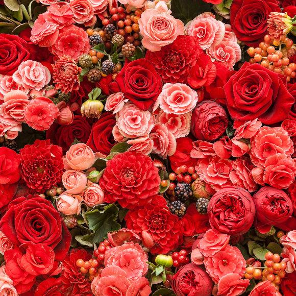 Rožių gausybė