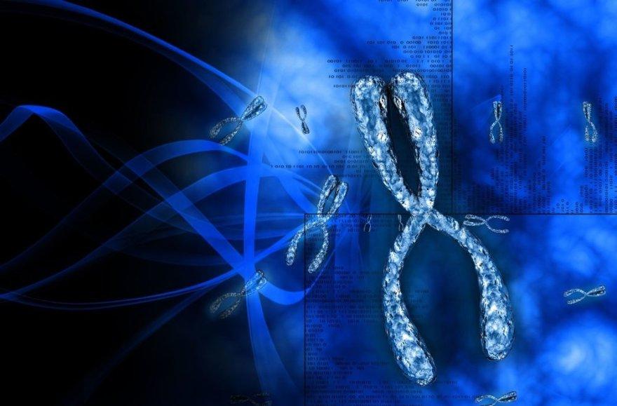 Chromosomos