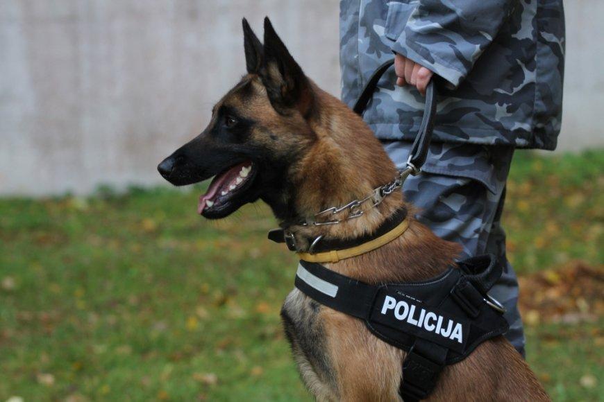 Tarnybinis šuo Enzo