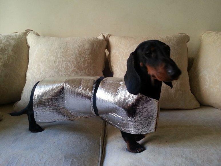 Skaivos Jasevičiūtės šuo su vėsinančiu drabužiu
