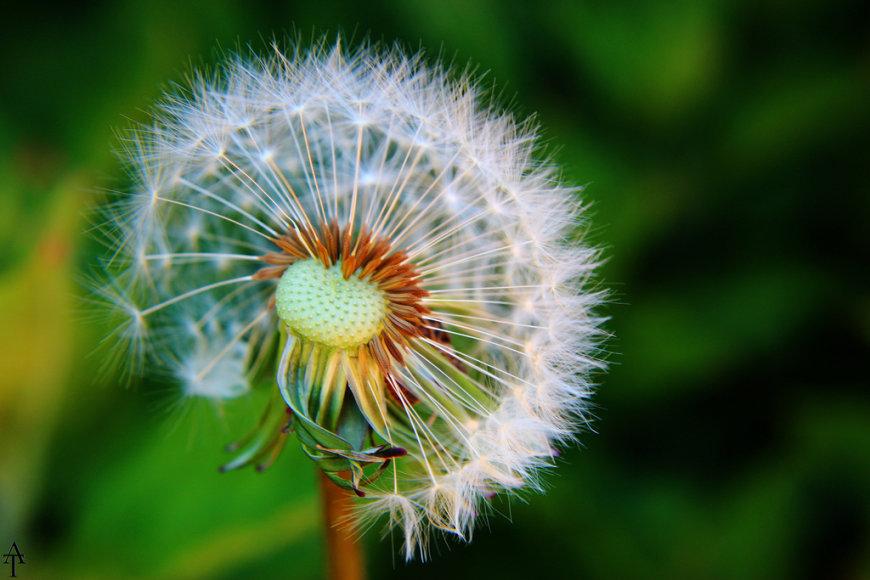 Pavasario alergija