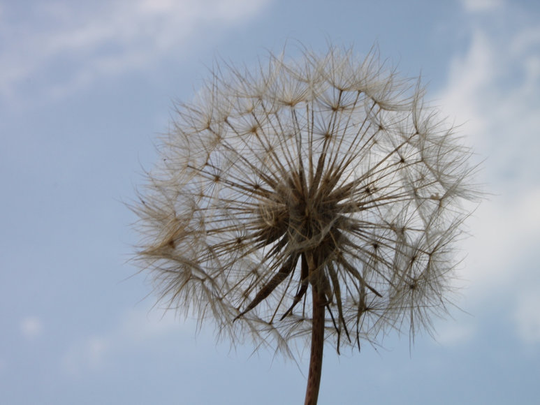 Alergija sustiprėja pavasarį