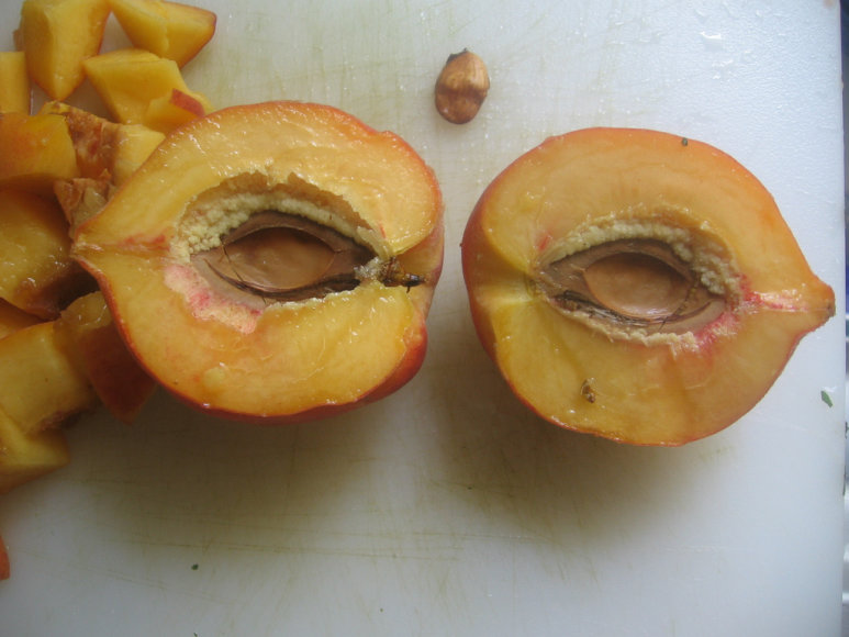 Kaukė iš persikų