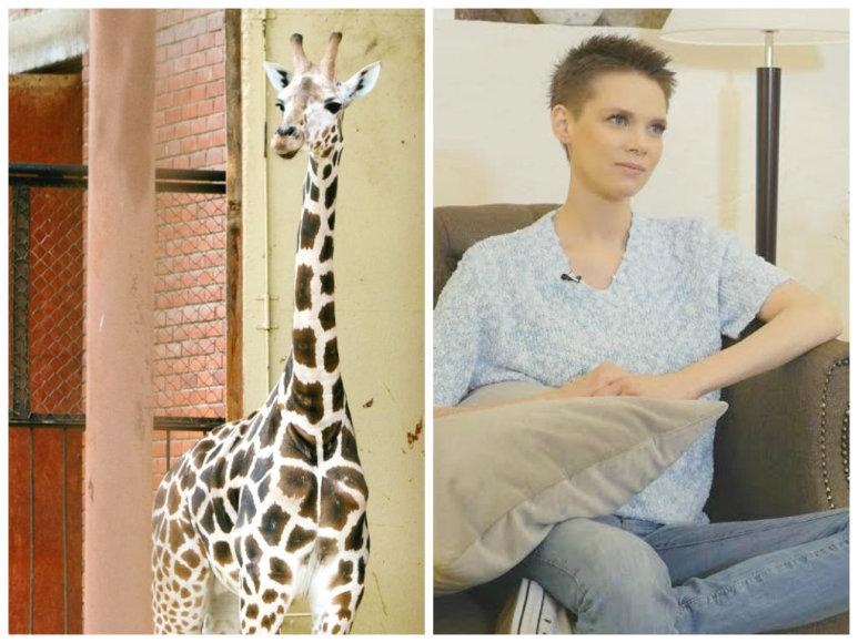 Aistė Paškevičiūtė ir nugaišę žirafiukas Gudrutis