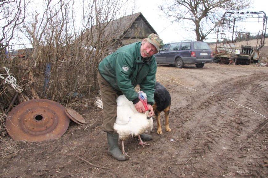 Raseinių rajono ūkininko A.Daukanto vengia kaimynai, jo draugas - kalakutas