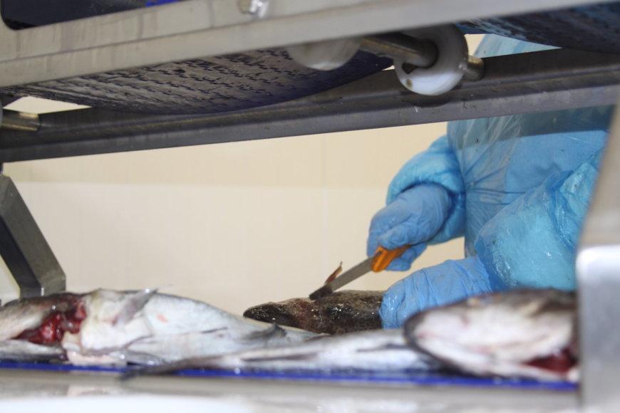 Klaipėdos žuvininkystės produktų aukcionas pakeitė veiklos kryptį ir ėmėsi žuvies perdirbimo.