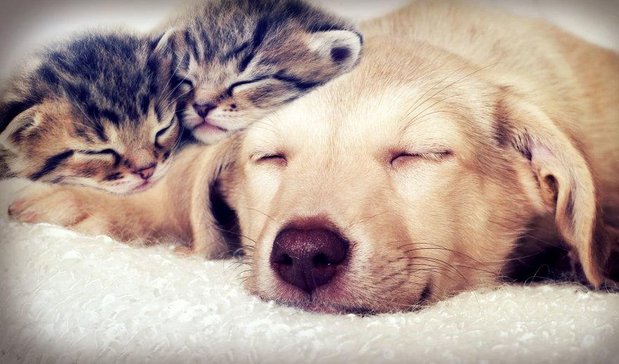 Šuniukas ir kačiukai