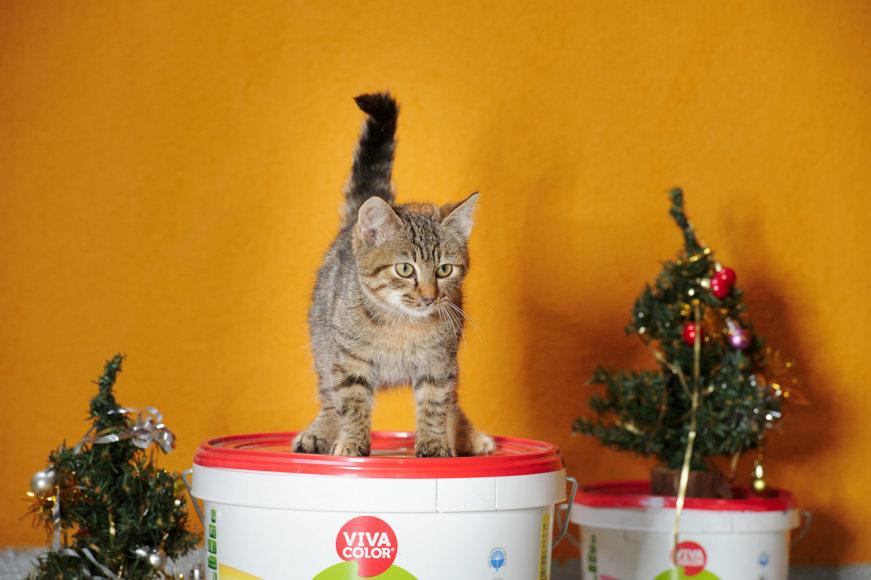 """Gyvūnų prieglauda VŠĮ """"Penkta koja"""" ir  VIVACOLOR organizavo akciją – TOP 20 gražiausių prieglaudos gyvūnų."""