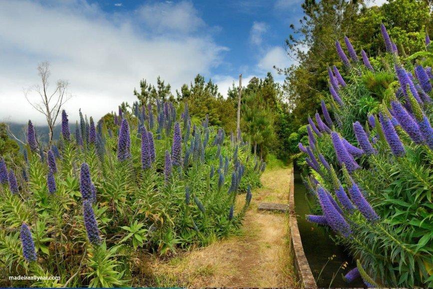 Levadų takai, palei kuriuos vaikščiojant bene geriausia susipažinti su salos gamta