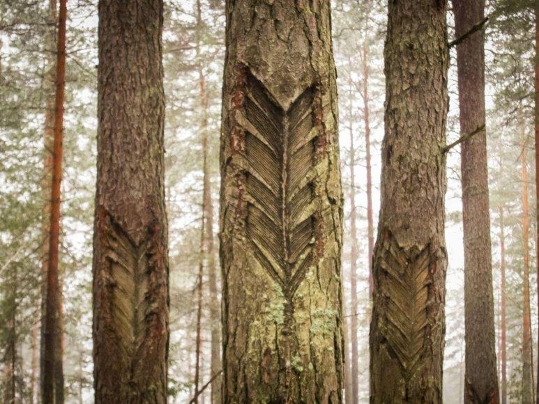 Kelionė per Aukštaitijos nacionalinio parko miškus ir pievas.