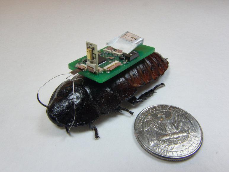 Robotas - kiborgas, moksliškai vadinamas biobotu