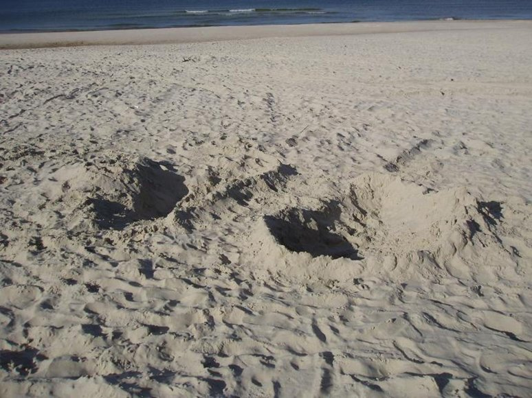 Išsimaudyti sugalvoję trys rusai į Smiltynės paplūdimį veržėsi  su visa mašina