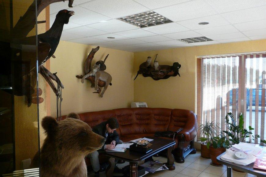 Gyvūnų iškamšos vienoje Varėnos įmonėje