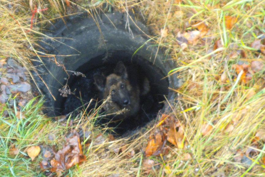 Šilutėje iš duobės ištrauktas šuo spruko nuo gelbėtojų.