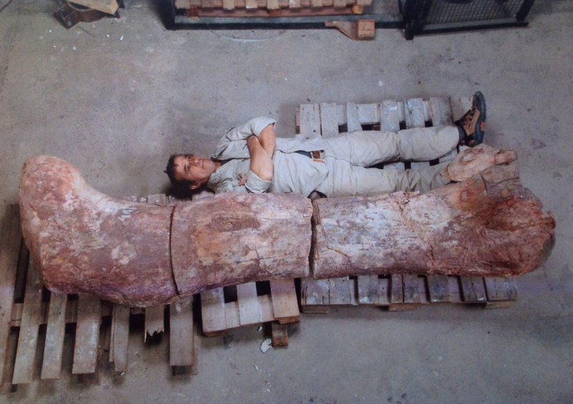 Atrastos didžiausio Žemėje gvenusio tiranozauro fosilijos