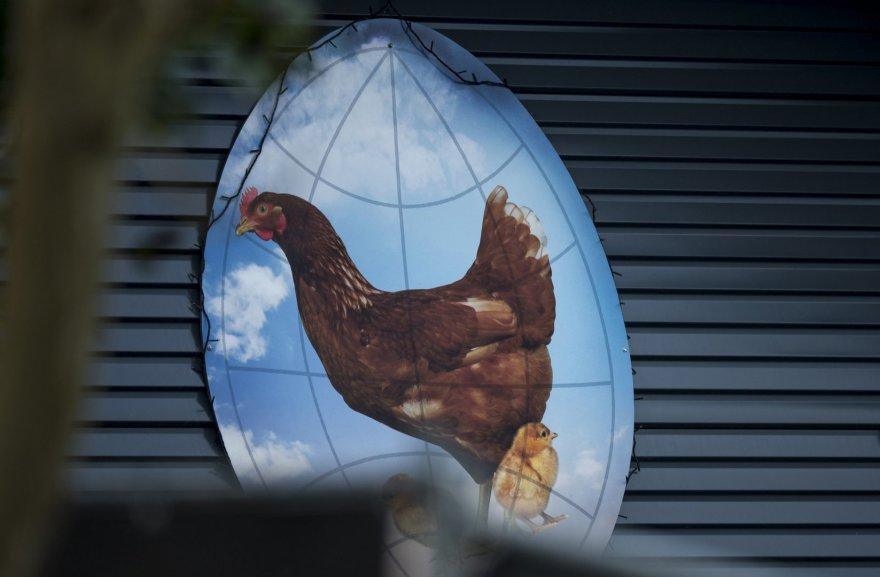 Hekendorpo fermoje aptiktas paukščių gripas