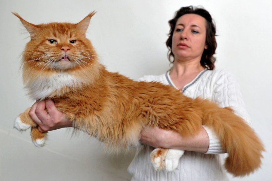Kačių paroda Biškeke