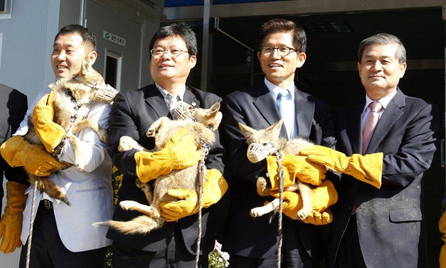 Woo Sukas Hwangas (kairėje) su komanda laiko klonuotus kojotus