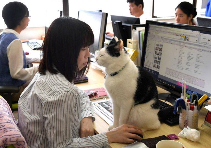 """AFP/""""Scanpix"""" nuotr./Nuo streso Japonijos darbuotojus gelbsti biuruose gyvenantys katinai"""