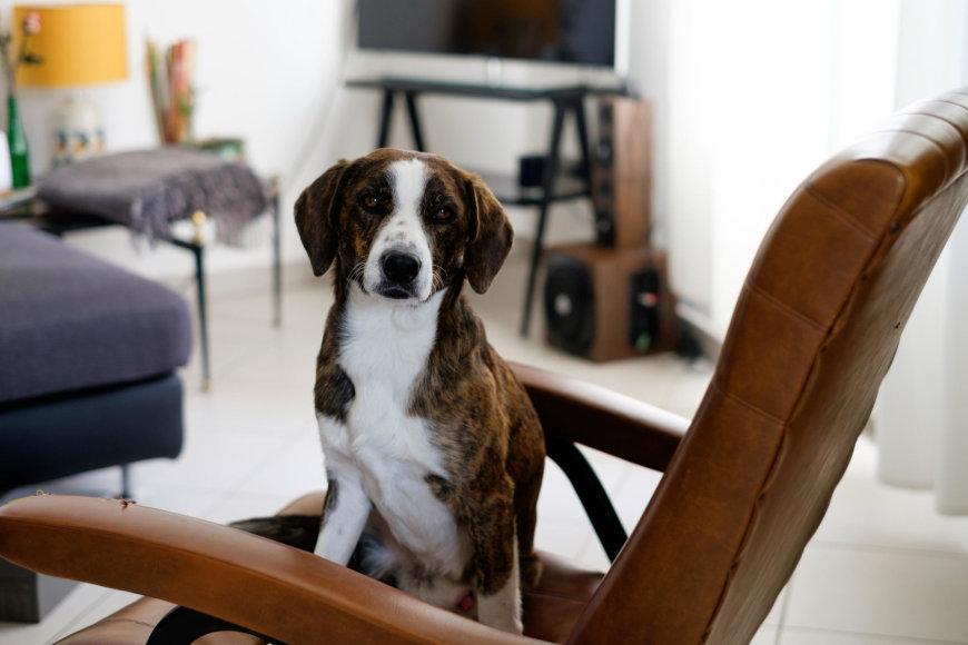 Šuo namuose