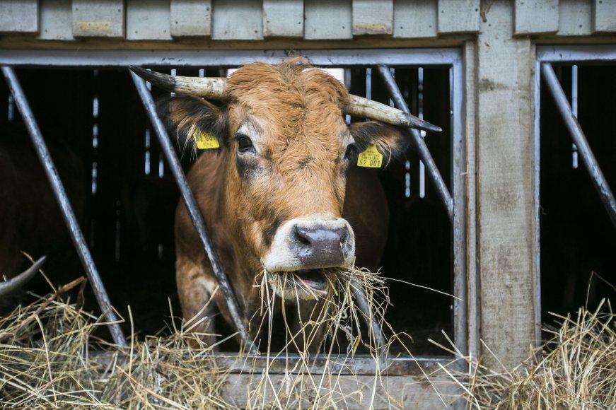 Ilzenbergo dvare ir ūkyje – draugų diena