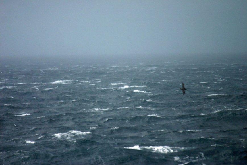 Plaukiant Dreiko sąsiauriu