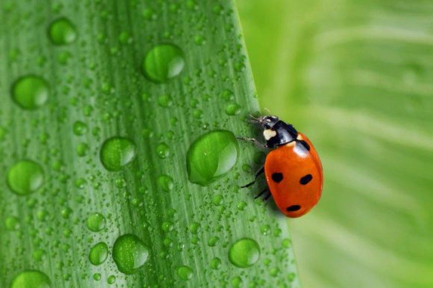 Lietus, žolė