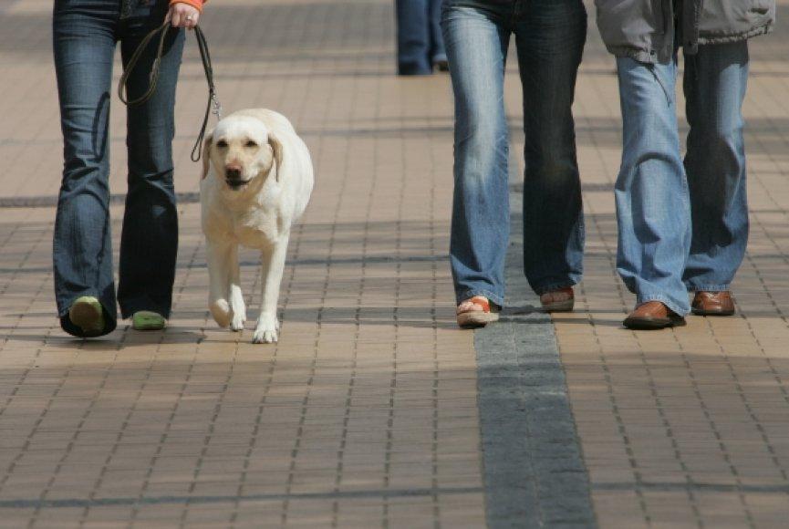 Šuo – žmogaus draugas.