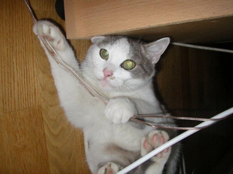 Namuose pavojų kelia ir elektros laidai, veikiantys elektros prietaisai.