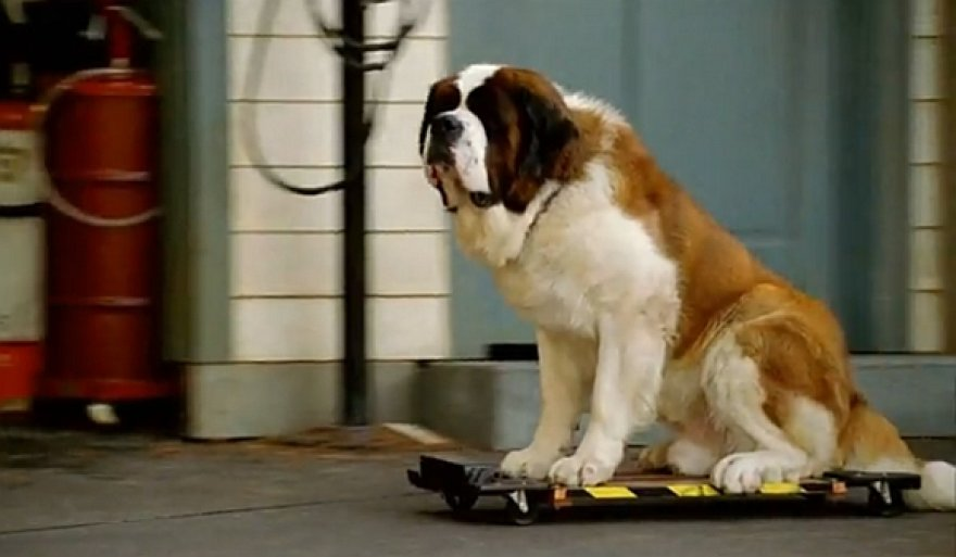 Betovenas išrinktas populiariausiu Holivudo šunimi.
