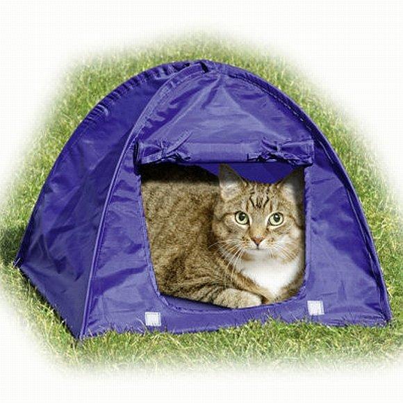 Katė palapinėje