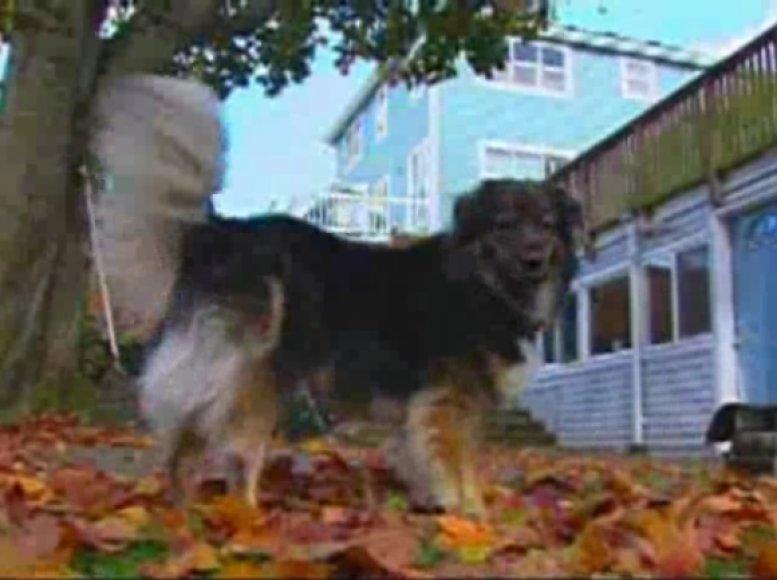 Cosmo – popierių ėdantis šuo