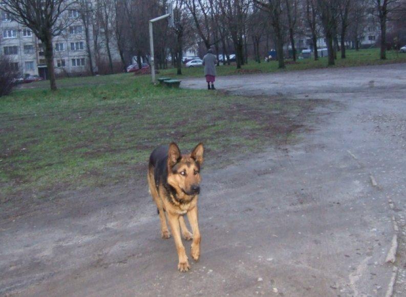 Žirmūnuose klaidžiojantis šunelis