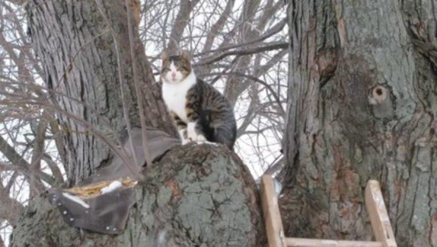 Katinas Almondas nė neketina leistis žemyn.