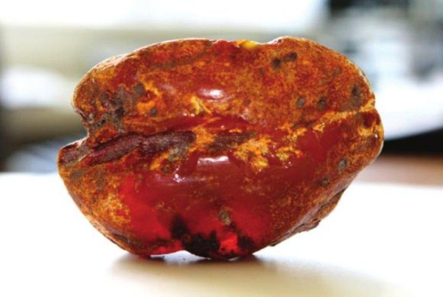 Daugų gyventojai Vaitulevičiai šį 285 gramus sveriantį gintaro gabalą rado savo šiltnamio dirvoje.