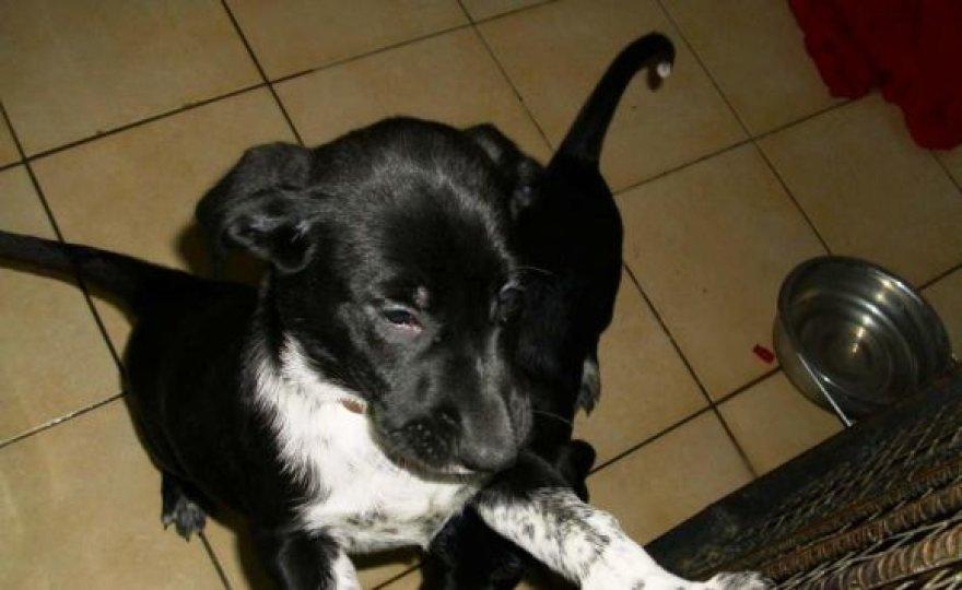 Taip šunelis atrodė sanitarinės tarnybos narve prieš kelis mėnesius.