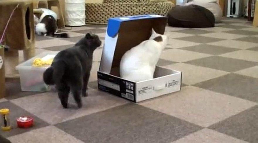 Katiniškas pokštas – uždaryti draugę dėžutėje.