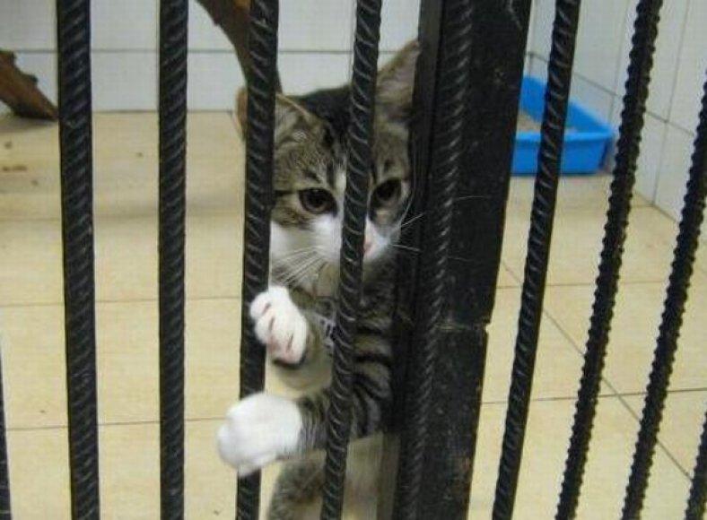 Sterilizacija gali išgelbėti gyvybę šiai katytei.