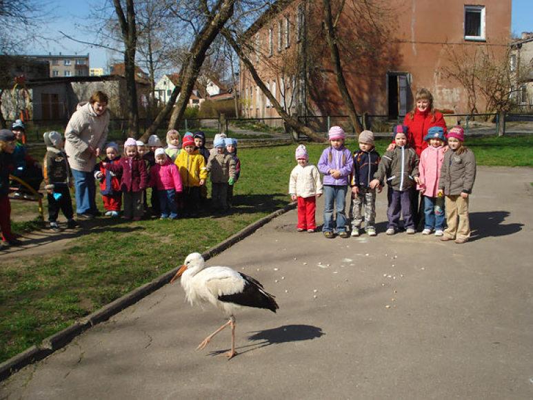 Gandras vaikų darželyje